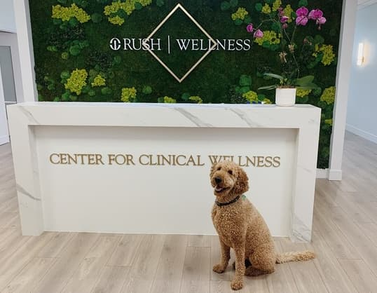 The Center for Clincial  Wellness gets a visit from Summer, a certified hypoallergenic, emotional-support dog.