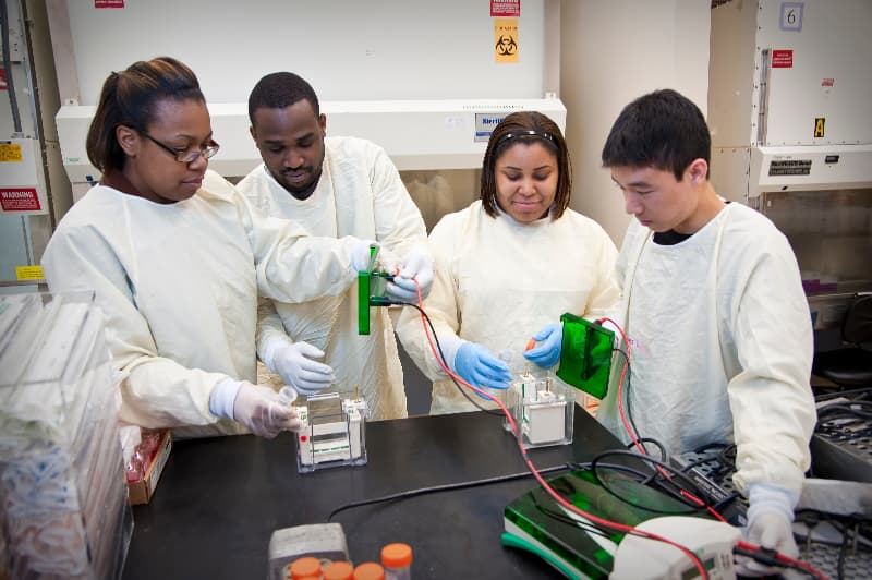 Students work together in lab